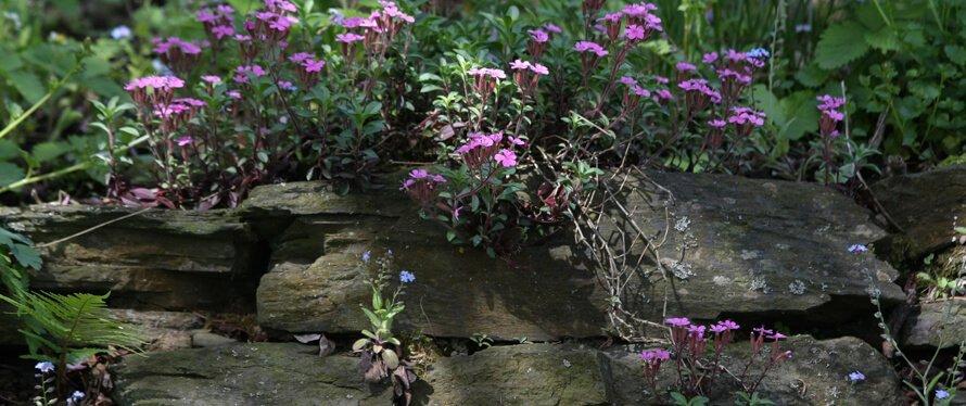 Trockenmauer mit Blumen bepflanzt