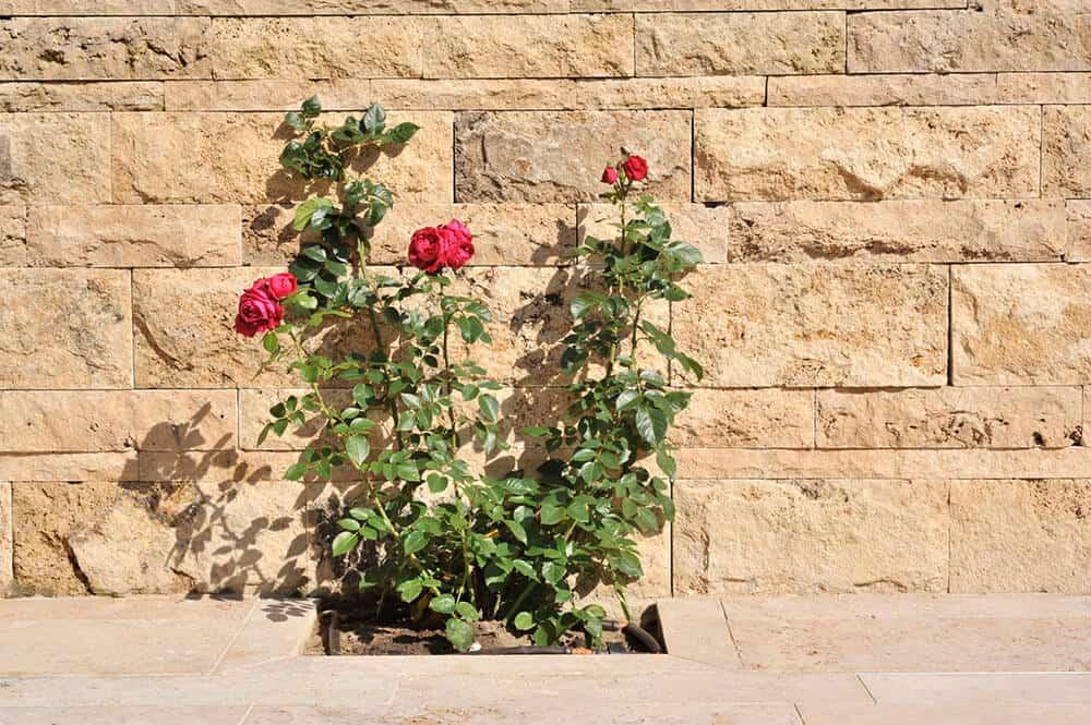Terrassenplatten & Mauersteine aus Travertin