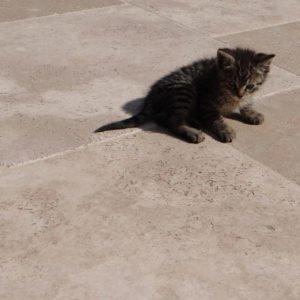 Bodenplatte Travertin Troja hell (Römischer Verband) für Außenbereiche
