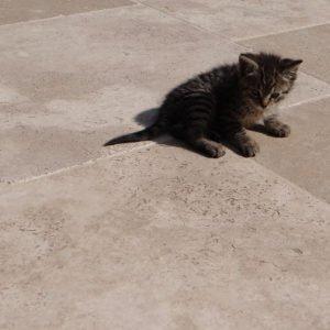 Gartenplatte Travertin Troja (Römischer Verband)
